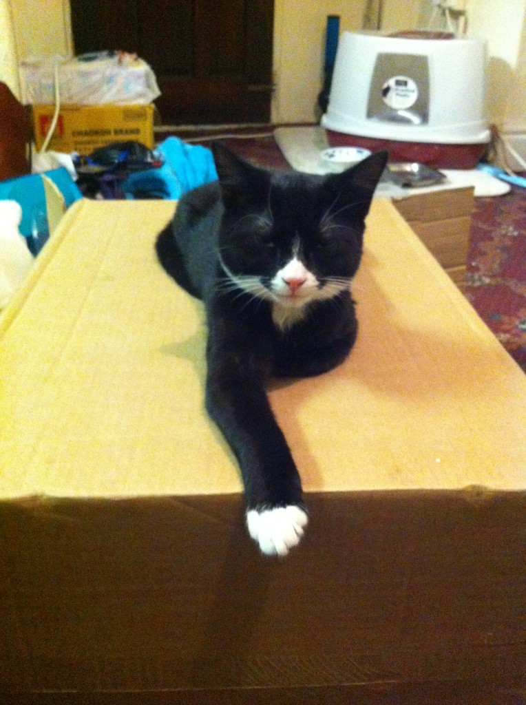 Otto the cat chills out on a box